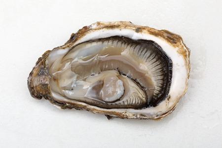 Photo d'une huître - a-t-elle un cœur ? Quizz de fin d'année