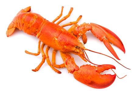 Les pinces du homard ont-elles le même rôle ? Quiz de fin d'année
