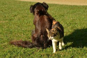 Douleur aiguë chez le chien et le chat