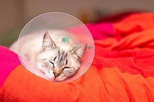 Mon vétérinaire a prescrit une collerette à mon animal