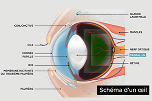 Read more about the article Les urgences oculaires