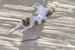 Read more about the article Les envenimations par les crapauds et les serpents